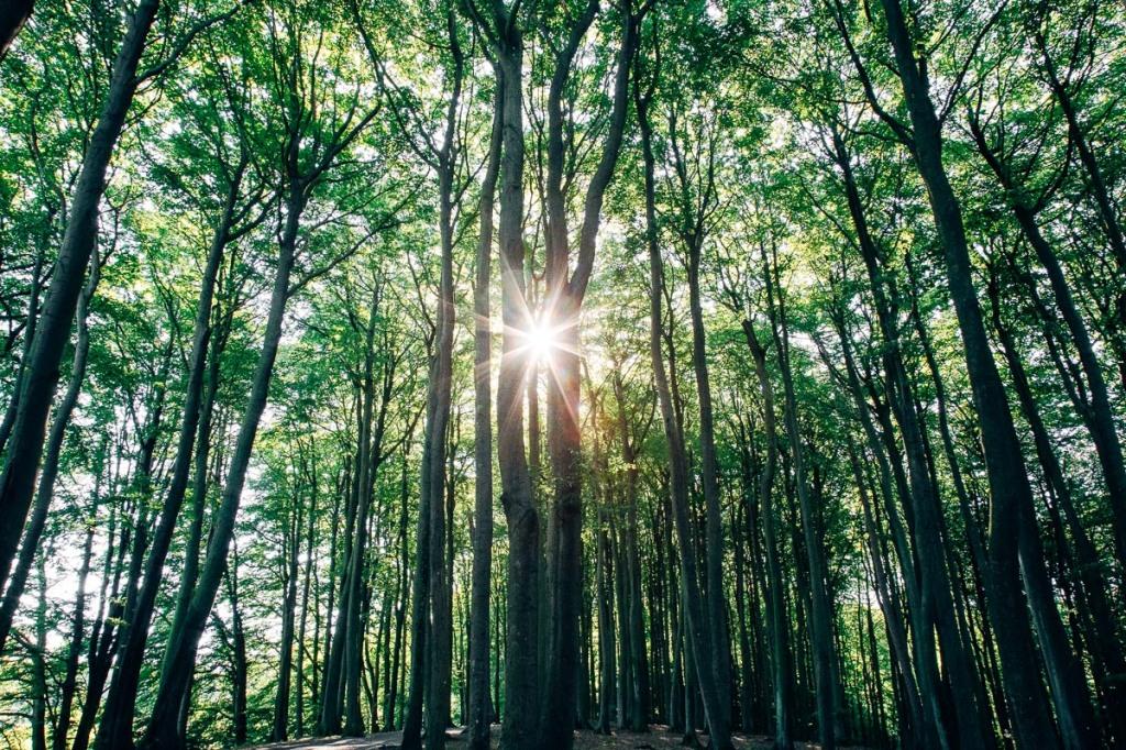 Sonnenstrahlen im Wald auf Rügen